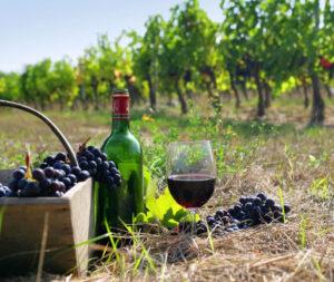 vin greque